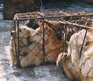 China Fur Trade (Dogs) 02