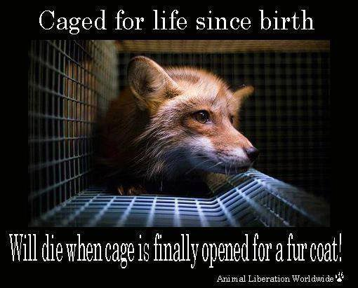 Caged for Life Since Birth poster