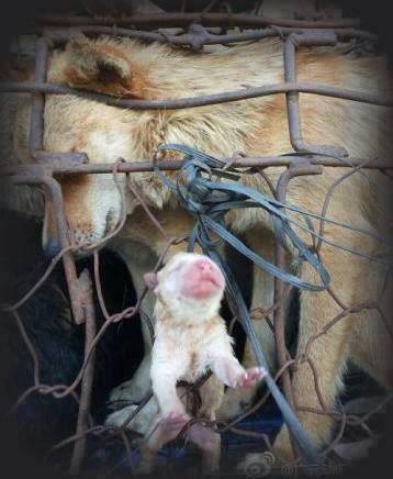 Dog w Puppy imprisoned in China Photo by CareForChineseAnimals
