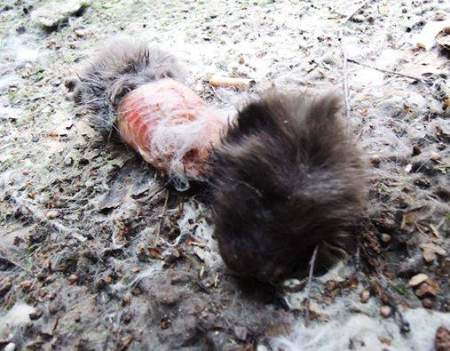 Fox baby skinned still alive (graphic)