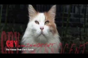 Trailer Photo:Cat and Dog Fur Trade